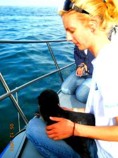 Michelle Jewel with Cape fur seal pup