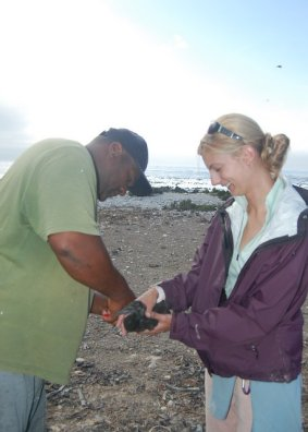 Michelle Jewell ringing cormorants on Dyer Island