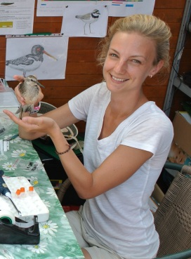 Michelle Jewell collecting blood from a red knot