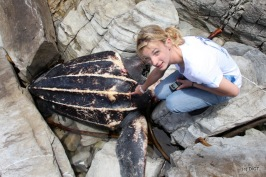 Michelle Jewell with stranded leatherback turtle