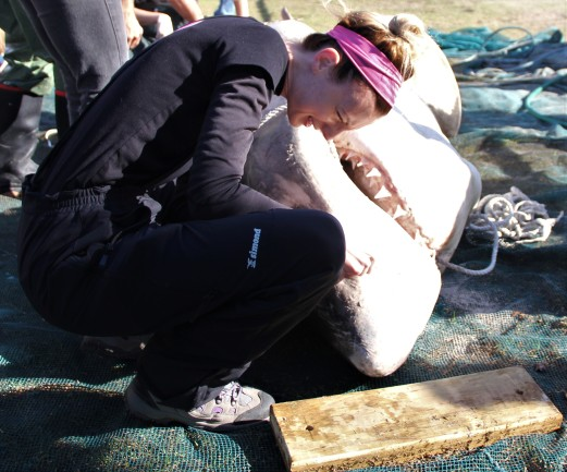 Michelle Jewell at a great white shark dissection